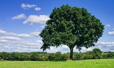 Pregare Dio o un albero: Il buono arriva dal passato